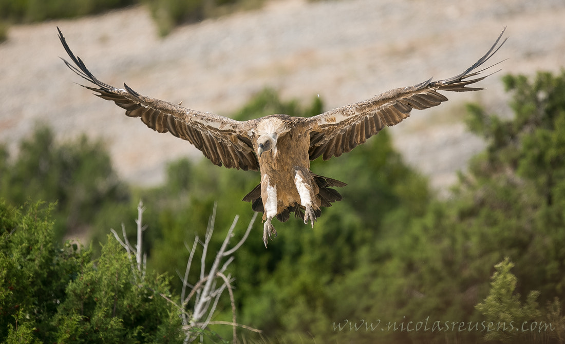 Photograph Landing gear down -checked!- by Nicolas Reusens on 500px