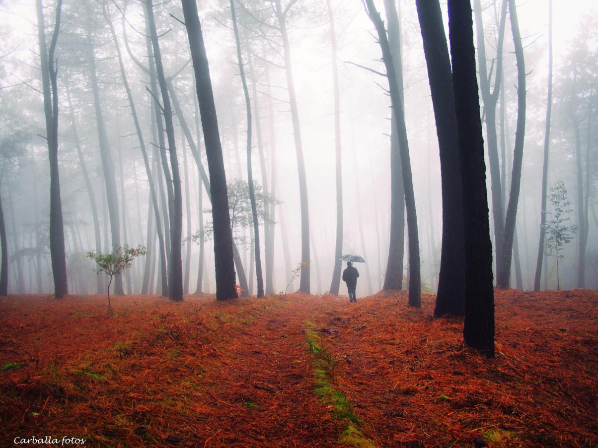 Photograph Mists of galician forest. by Guillermo  Carballa on 500px