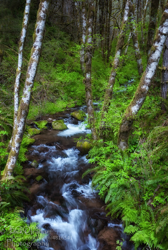 A Stream somewhere in Oregon's Coastal Range