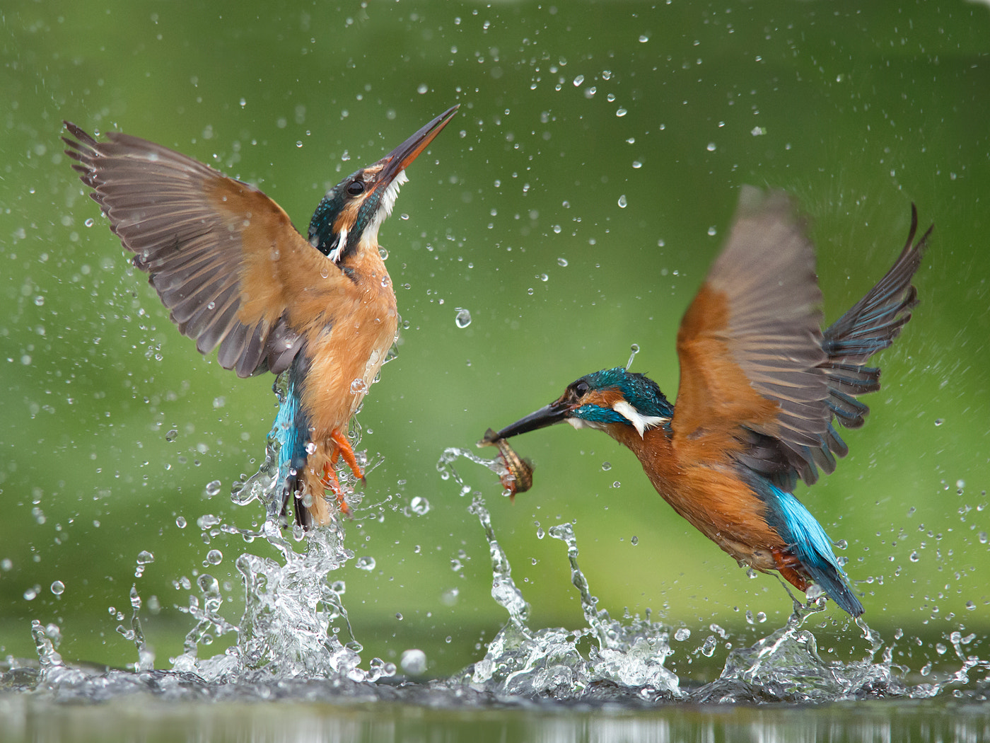 Photograph Mad fishing by Jamie MacArthur on 500px