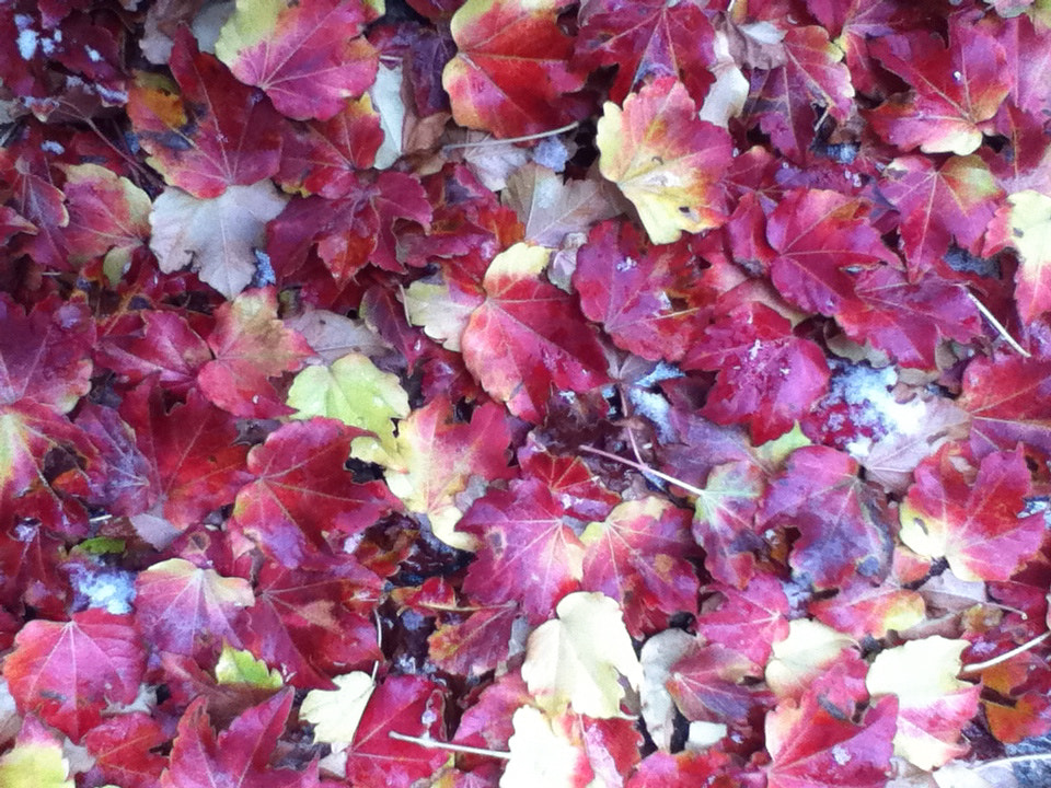Photograph Automne leaves by Marzieh Eslami on 500px