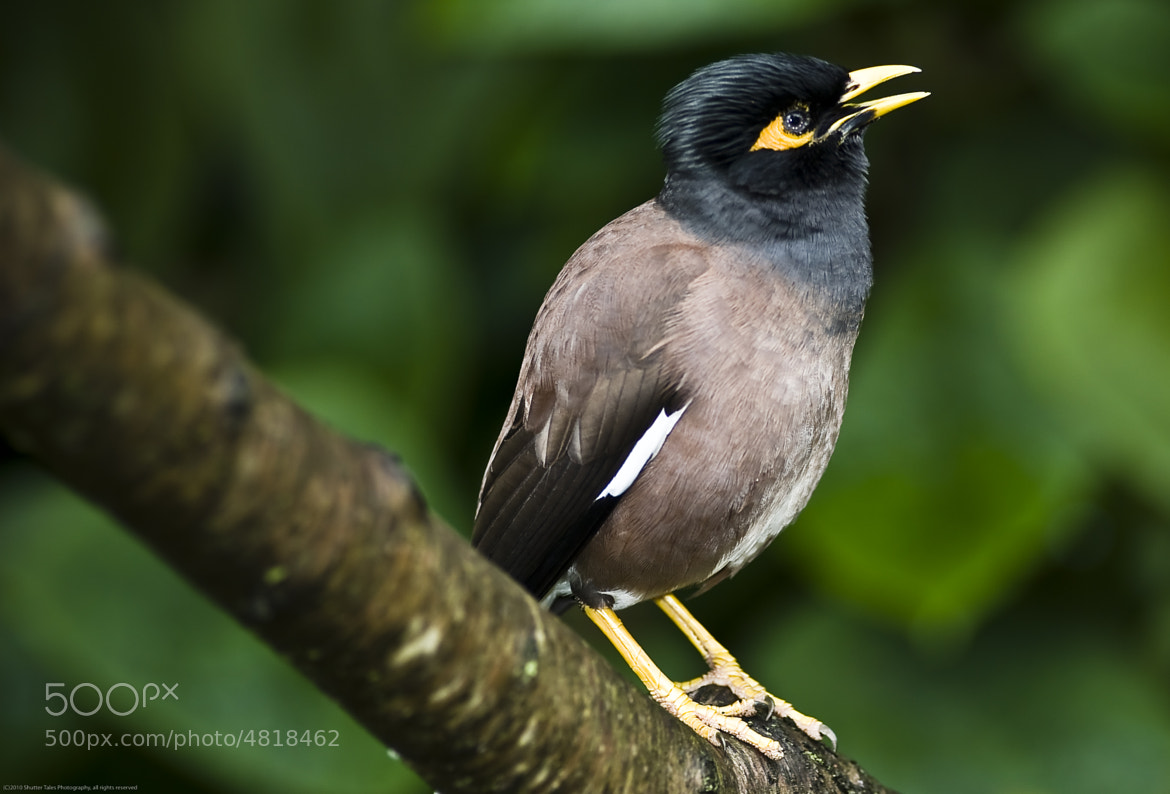 Photograph Yellow Beak by Paul Cons on 500px