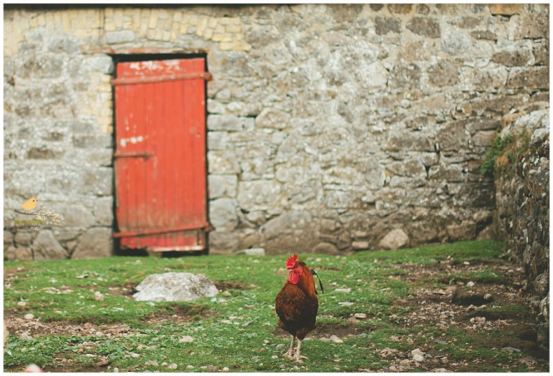 Photograph Walk like a Rooster by Kay Maguire on 500px