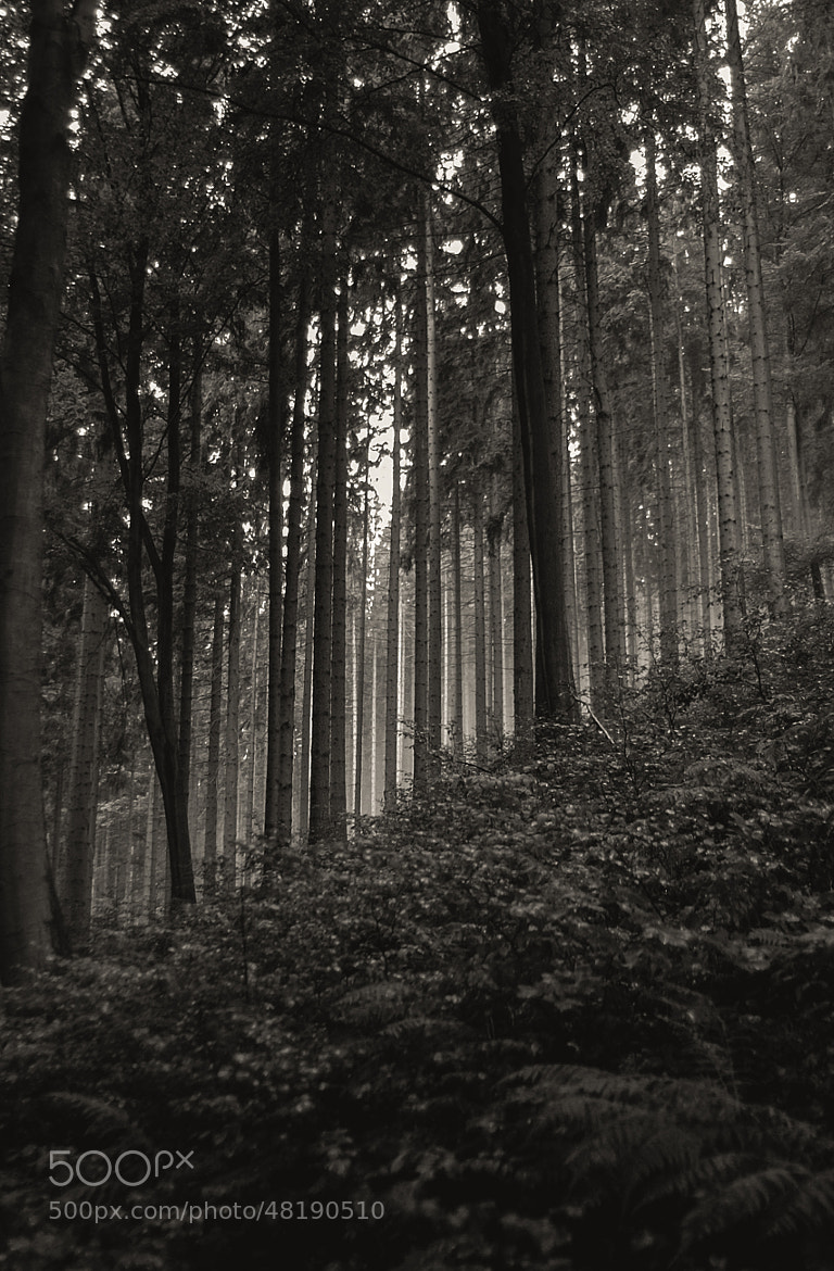 Photograph Forest in Thuringia by Kai Michael Neuhold on 500px
