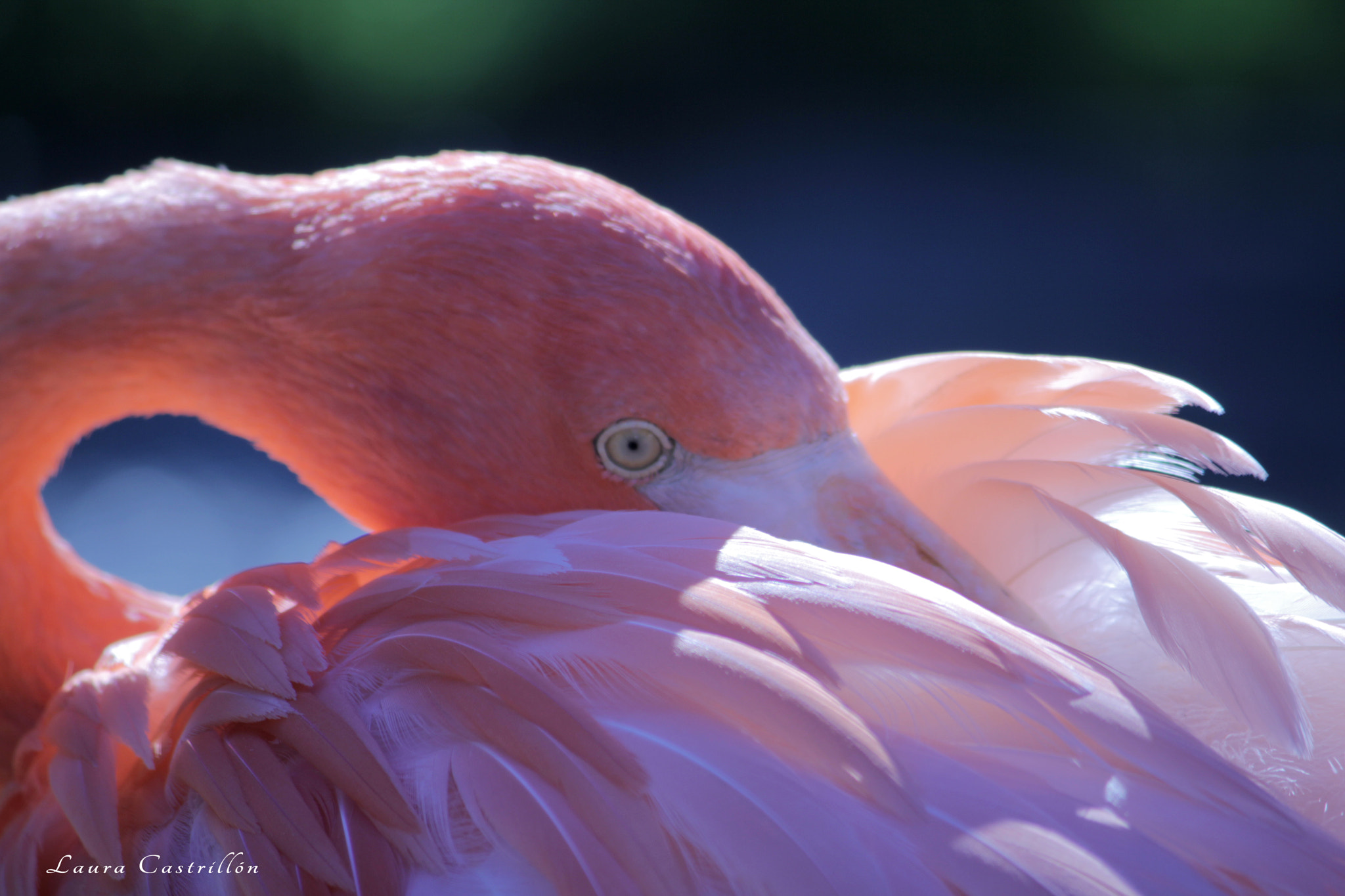 Photograph Pink by Laura Castrillon on 500px