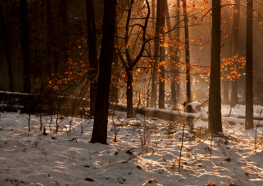 Photograph In the wood by Andrea Jancova on 500px