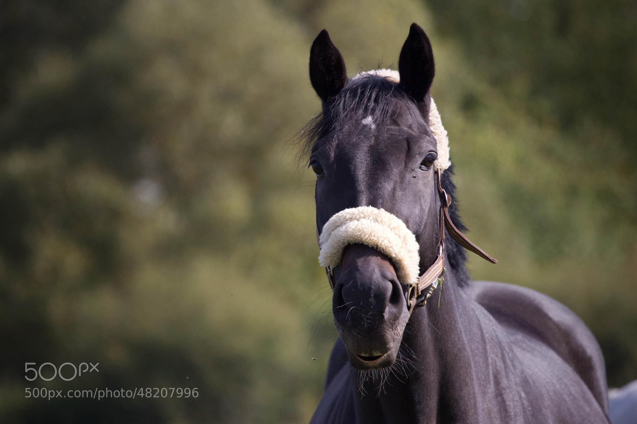 Photograph Pferd im Schwenninger Moos by Heike Kitzig on 500px
