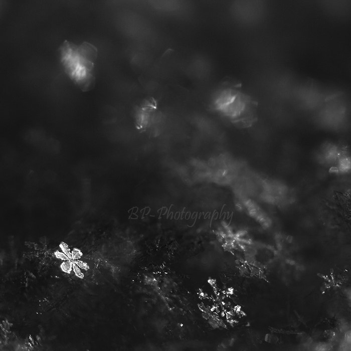 Photograph Snowflakes (2) by Petra Balla on 500px