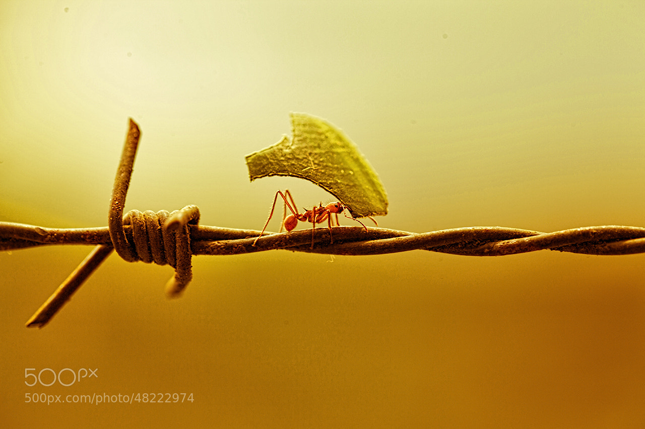 Photograph Hard Work by Carlos Chacon on 500px