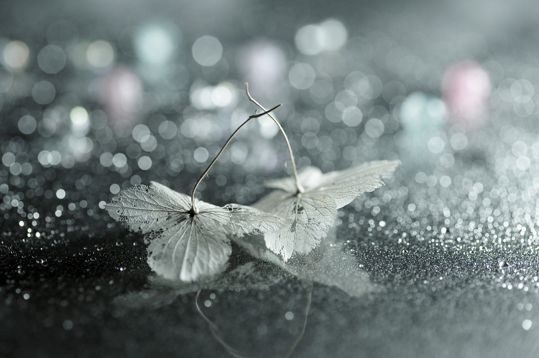 Photograph Fine And Mellow by Lafugue Logos   on 500px