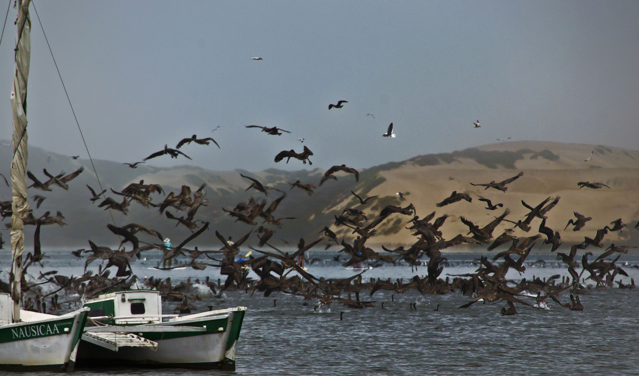 Photograph Boat n Birds by Michael Sheltzer on 500px