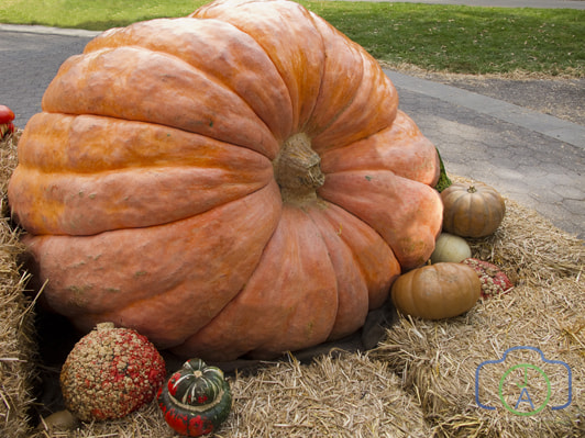 Photograph Giant Pumpkin by Jack L. Aiello on 500px