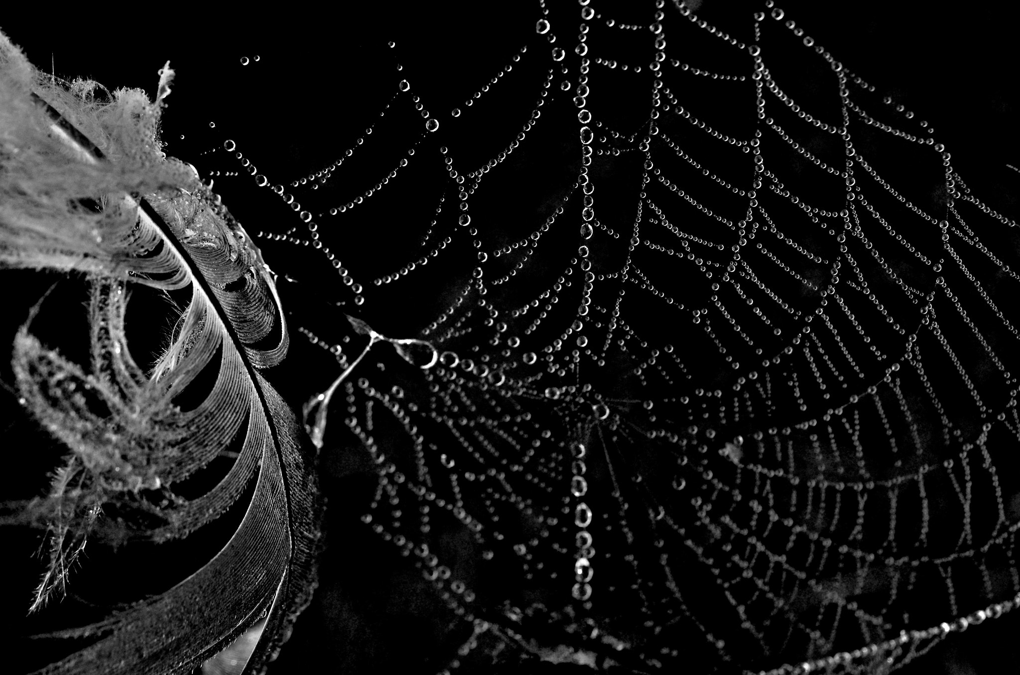 Photograph Dew and Feather by Mike Melnotte on 500px