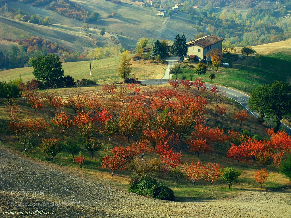 Photograph autumn - samone -(guiglia modena italy)  006 - DVD 14 by primo masotti on 500px
