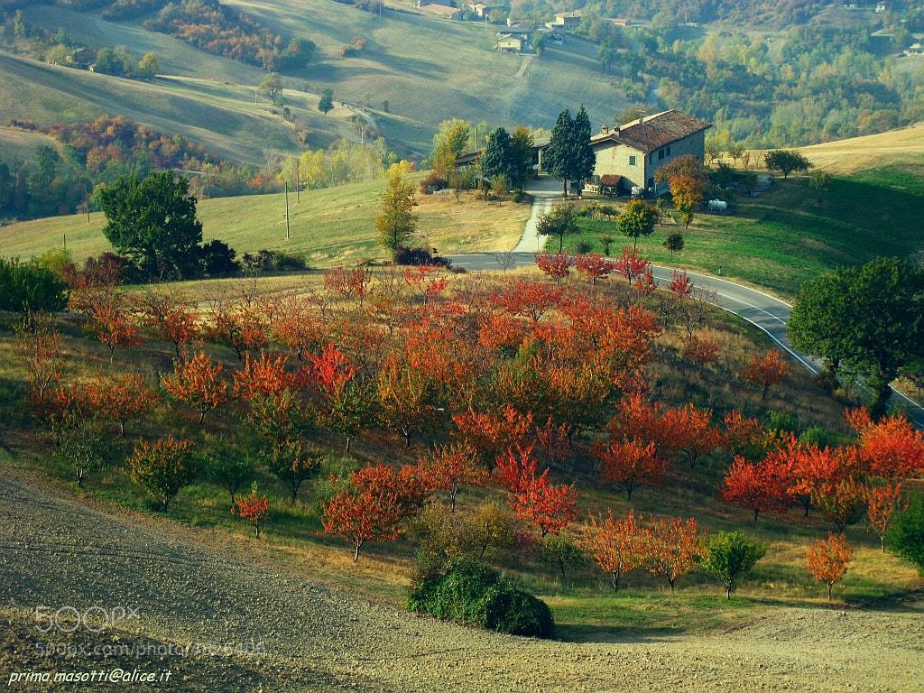 Photograph autumn - samone -(guiglia modena italy)  006 - DVD 14 by primo masotti on 500px