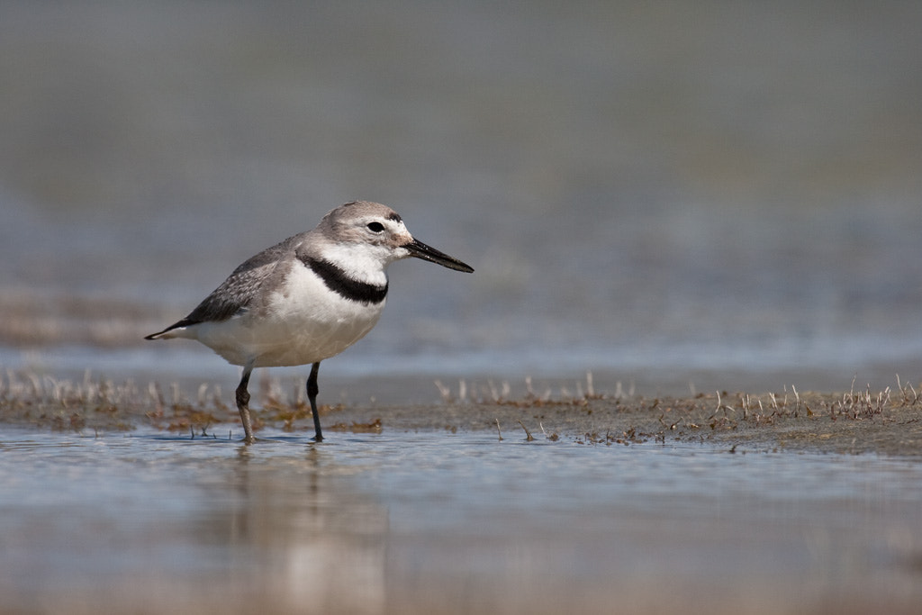 Photograph Wide-angle wrybill by Paul Sorrell on 500px