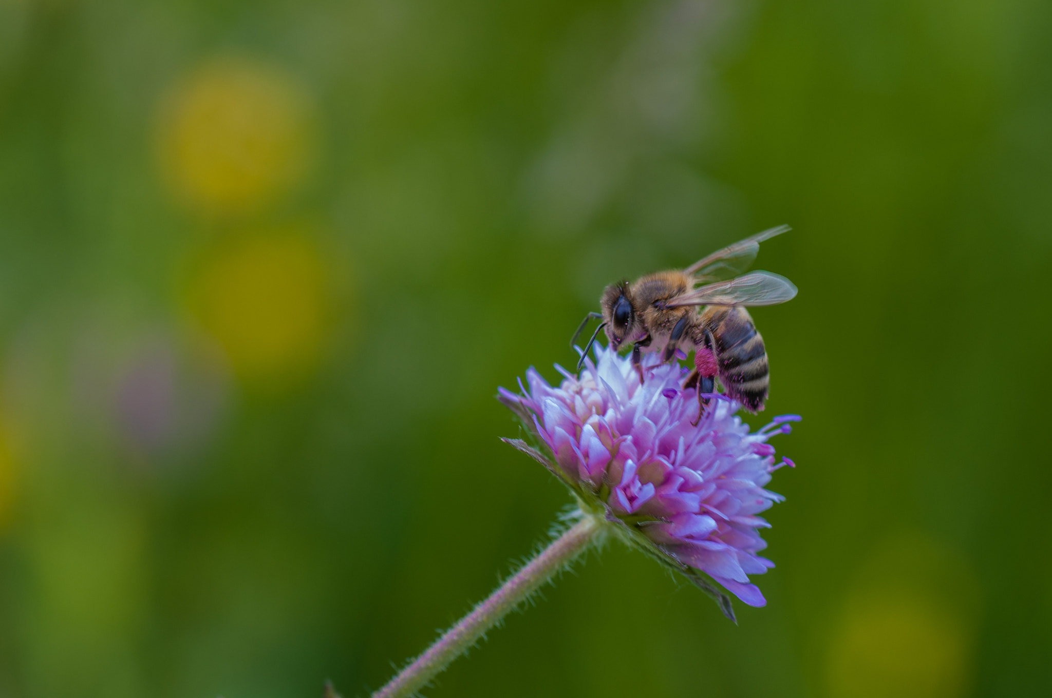 Photograph bee (05) by Vlado Ferencic on 500px