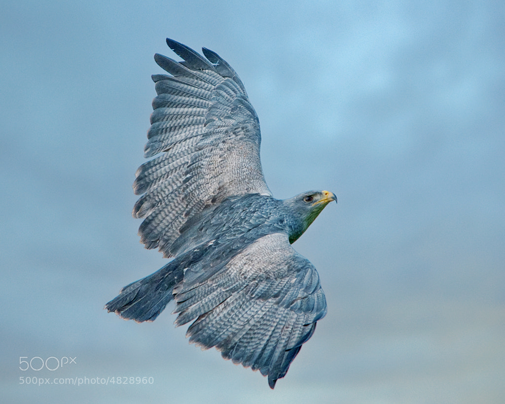 Photograph up, up, and away by Dieter Schaefer on 500px