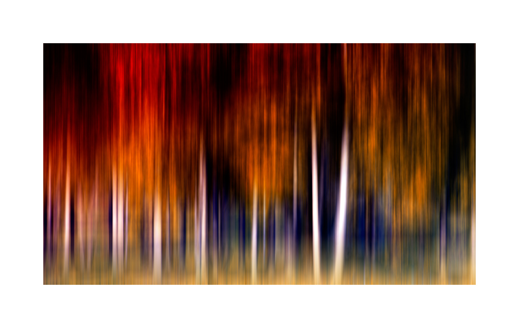 Photograph colors in the forest by Marek Czaja on 500px