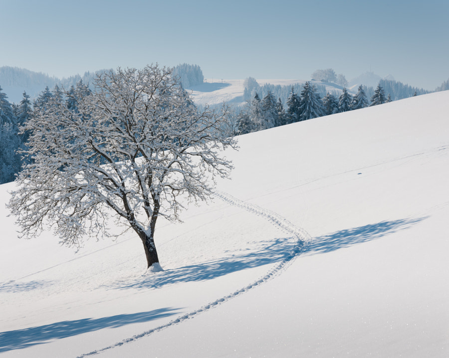 Shot near Wald, AR in Switzerland. Snow shoe hiking is very popular in this area.