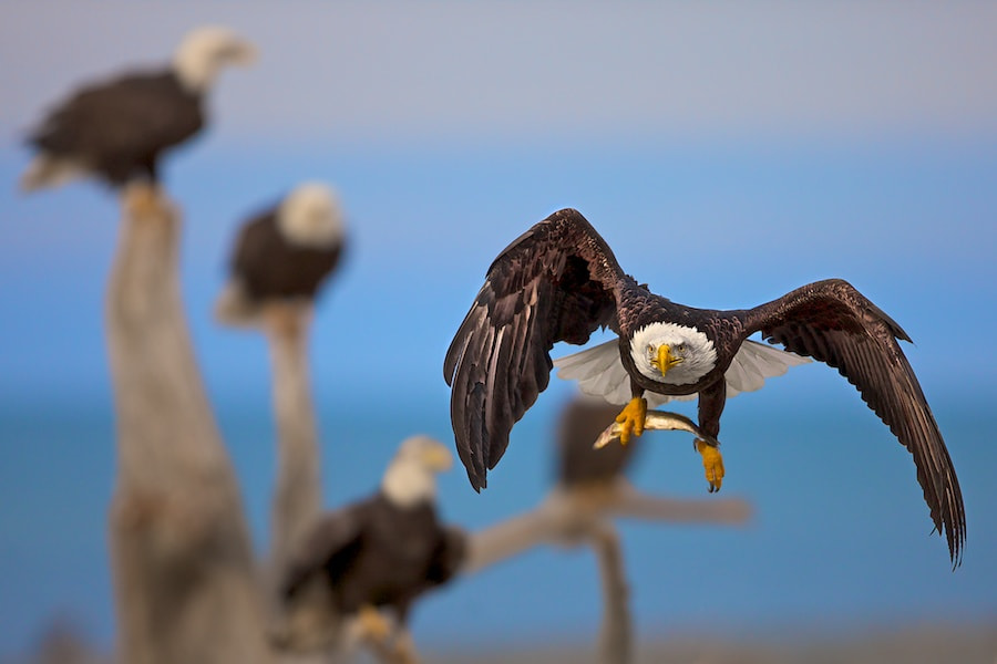 Photograph On The Fly II by Buck Shreck on 500px