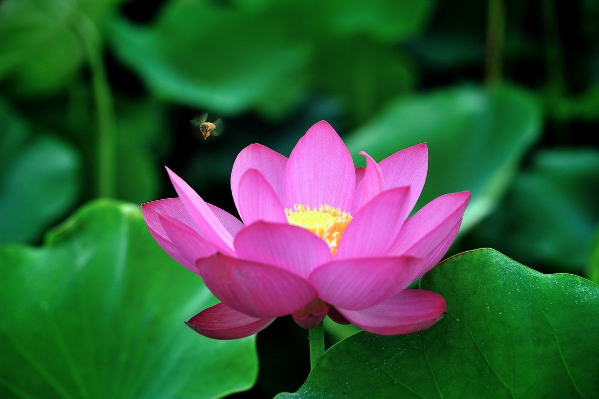 Photograph Bee & Flower by koh hyun soo on 500px