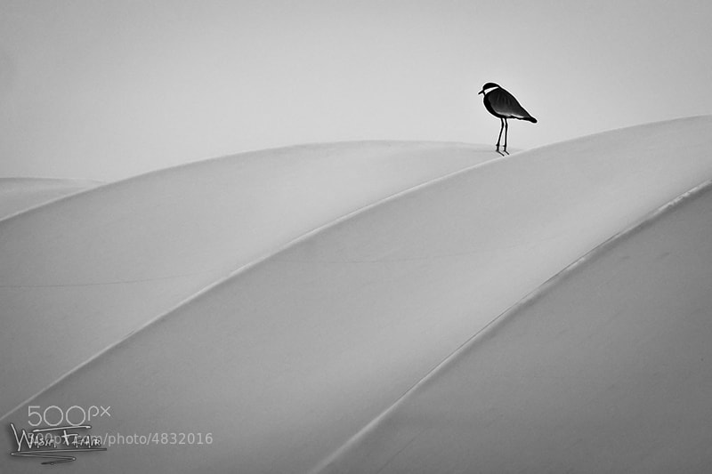 Lonely bird by Wasim Fatair (wasim_fatair)) on 500px.com