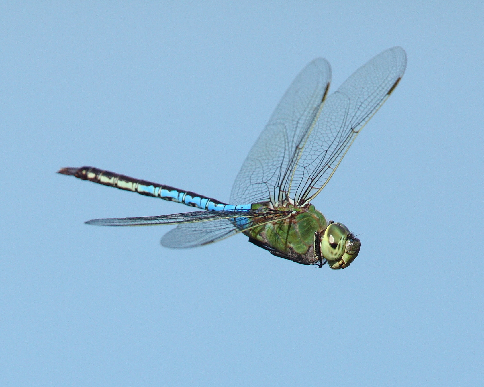 Photograph Dragonfly by Chim Co on 500px