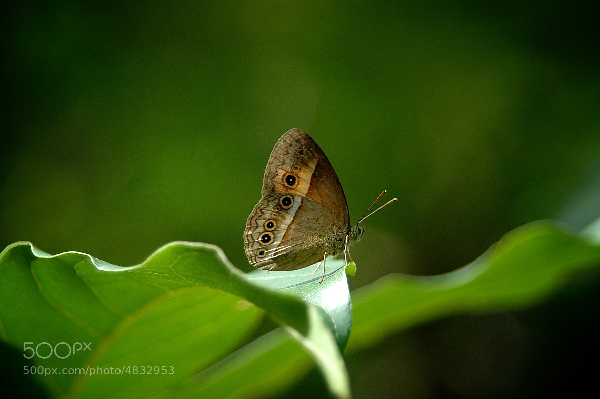 Photograph Resting by Martijn Akse on 500px