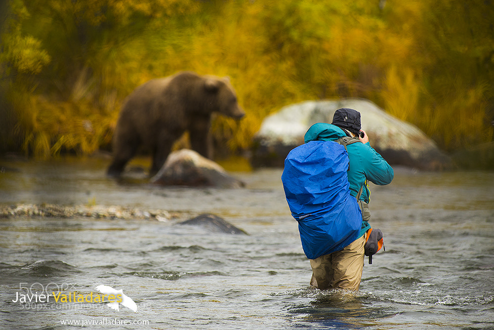 Photograph Bears in Alaska by Javier Valladares on 500px