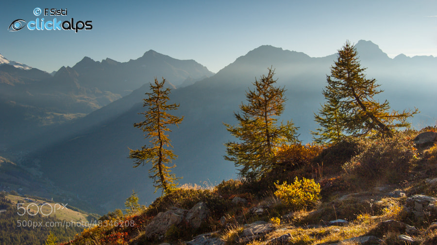 Photograph Une touche d'automne... (Valle d'Ayas, Valle d'Aosta) by Francesco Sisti on 500px