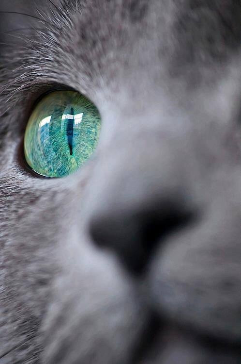 Photograph My Cat by Buri BS on 500px