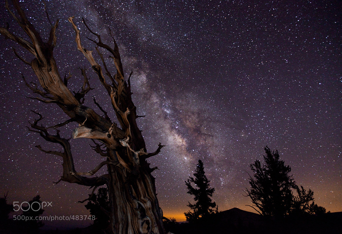 Photograph Blazing Bristlecone by Tom Lowe on 500px