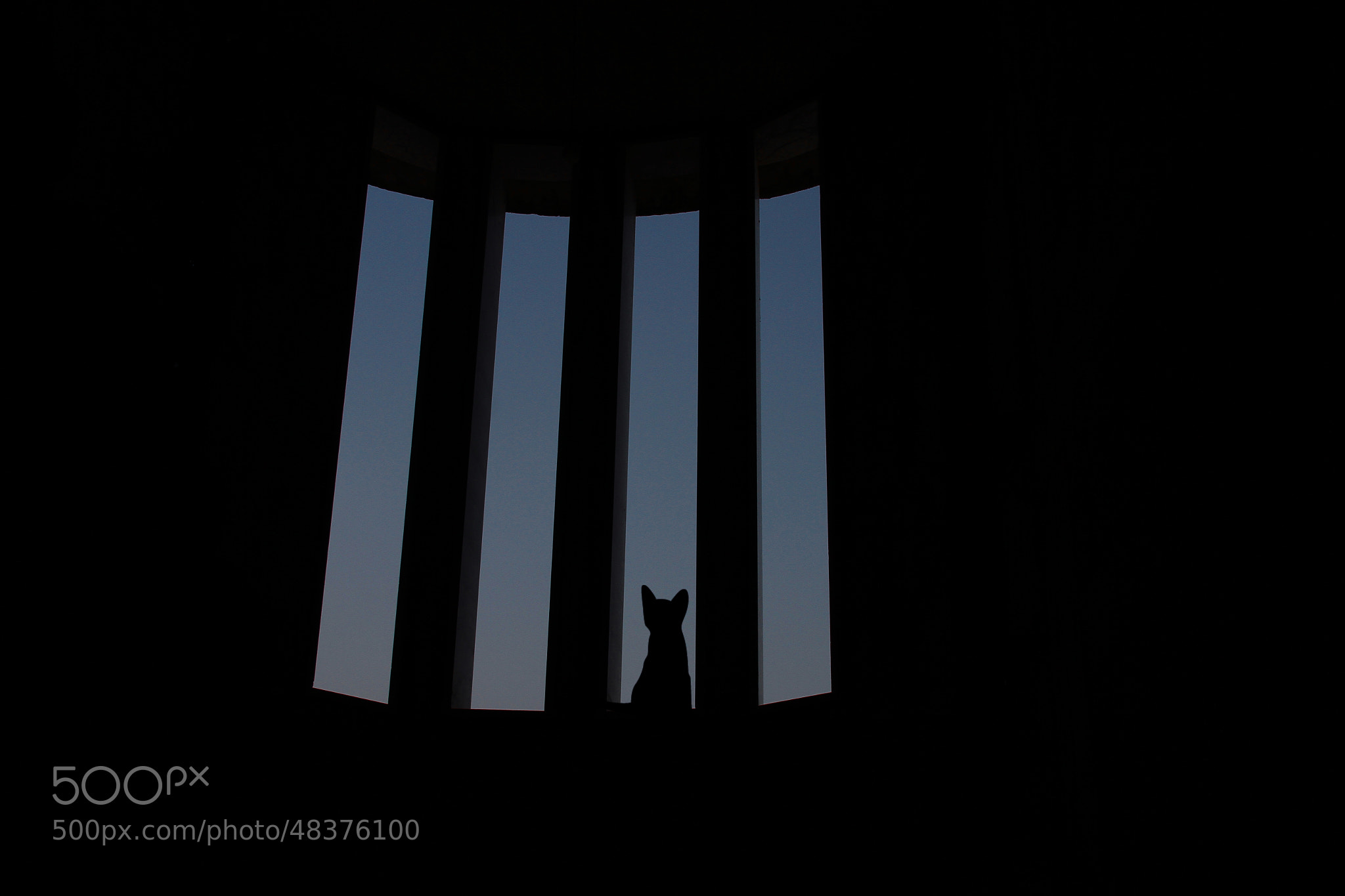 Photograph alone cat by ALiA Shoaib on 500px