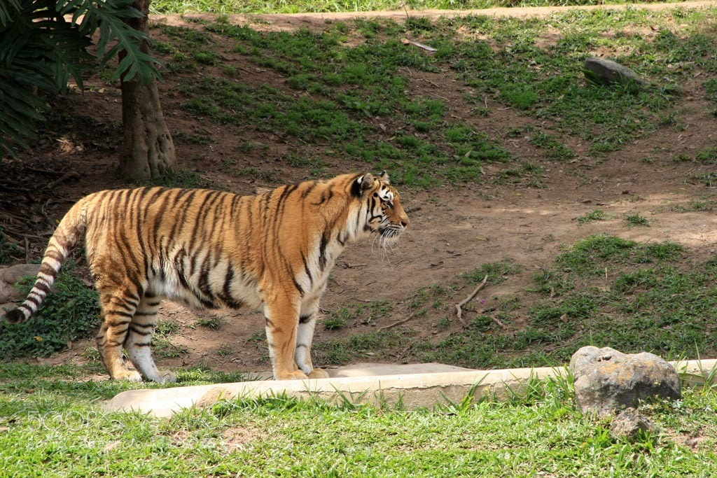 Photograph zoo by Emerson Menezes on 500px