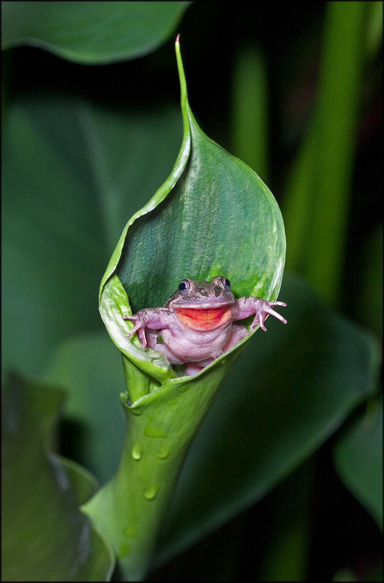 Photograph Frog Chair by Steve Passlow on 500px