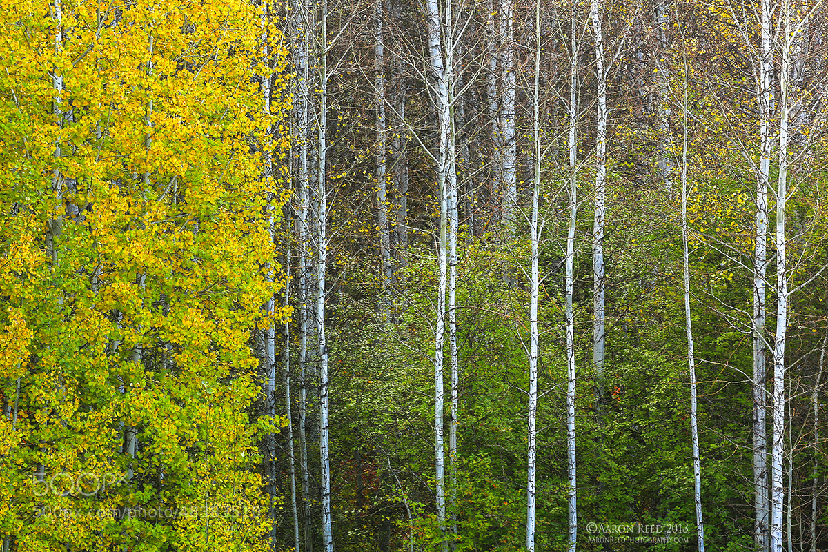 Photograph Autumn's Flag by Aaron Reed on 500px