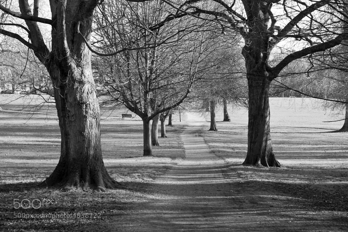 Photograph Park by Kim Turner on 500px