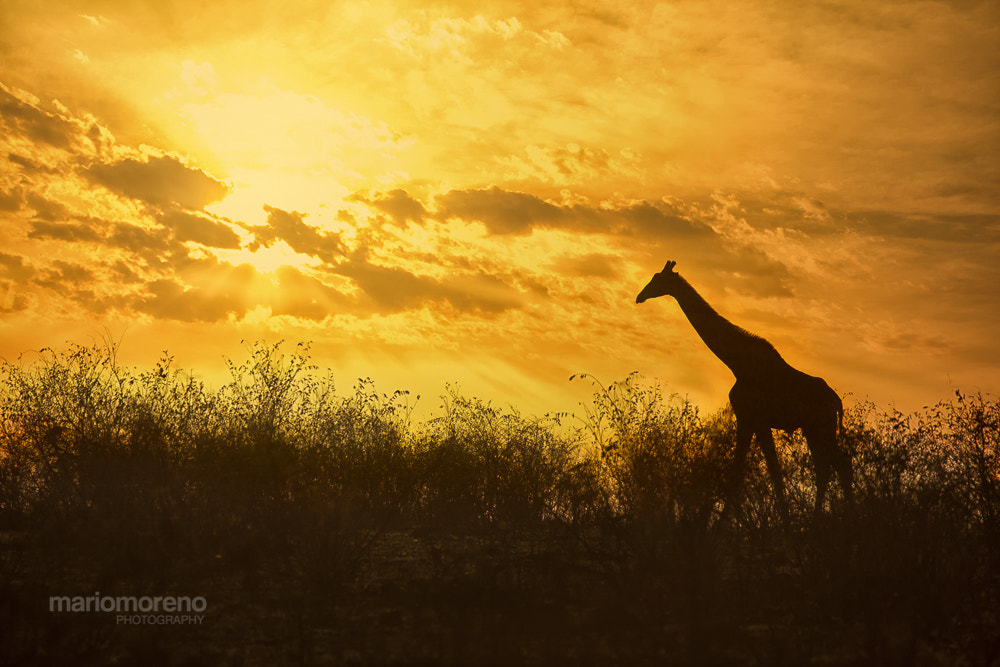 Photograph Sunrise in Africa by Mario Moreno on 500px
