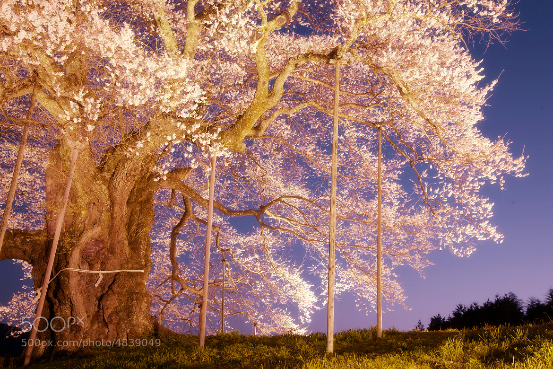 Photograph Sacred Tree by Tashi_Delek Nakata on 500px