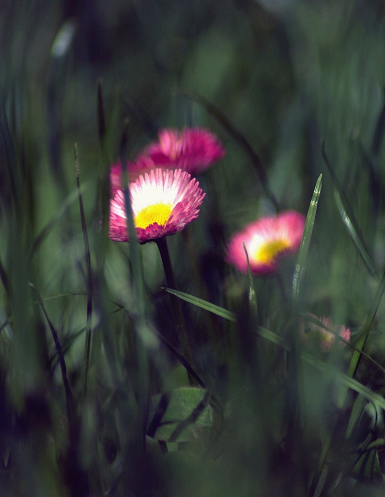 Photograph Untitled by Beata  on 500px