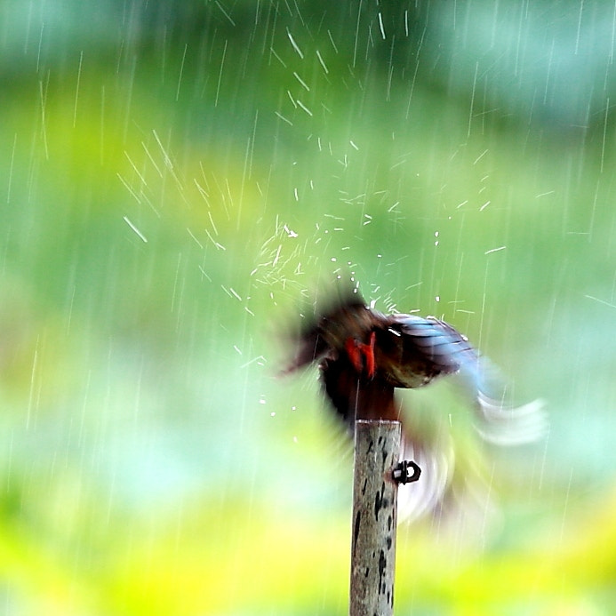 Photograph in the rain by Woody L. Chu on 500px
