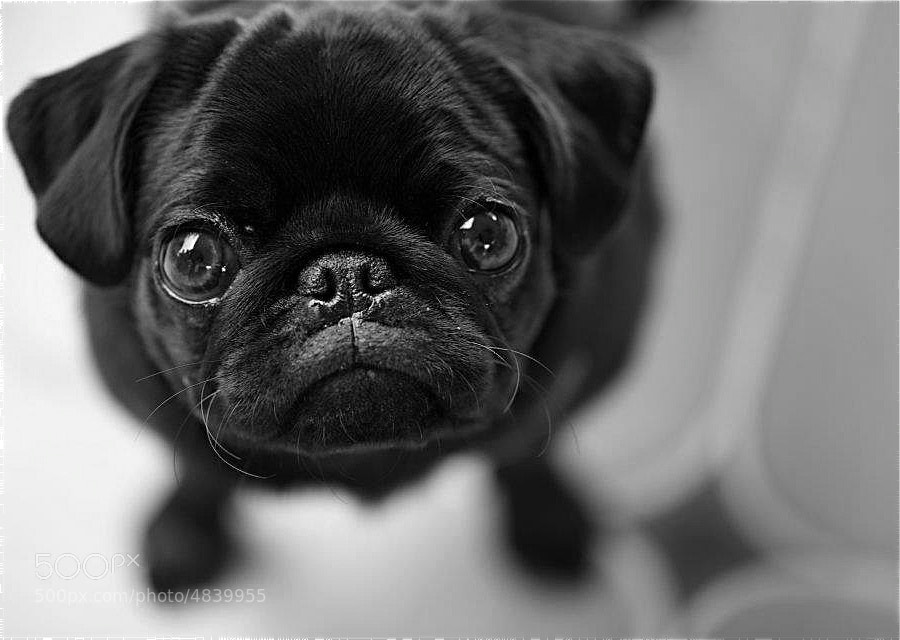 Photograph Martina by Valeria Buttaci on 500px