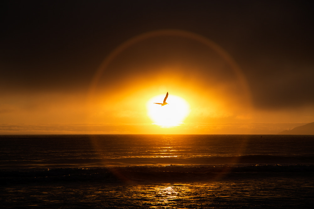 Photograph SUNSET SEAGULL by Matthias Würtemberger  on 500px