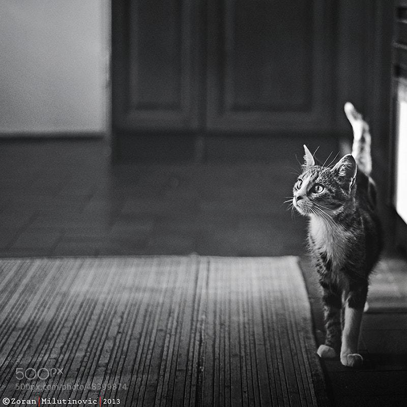 Photograph Catching Light by Zoran Milutinovic on 500px