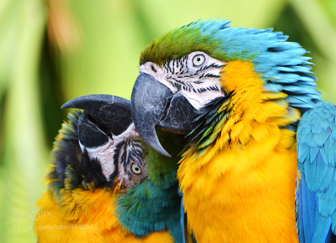 Photograph Love Birds by Michael Fitzsimmons on 500px