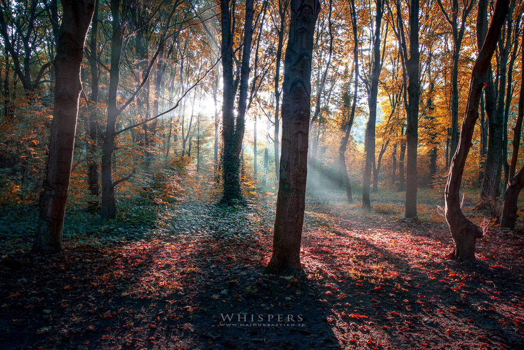 Photograph Whispers by Bastien HAJDUK on 500px