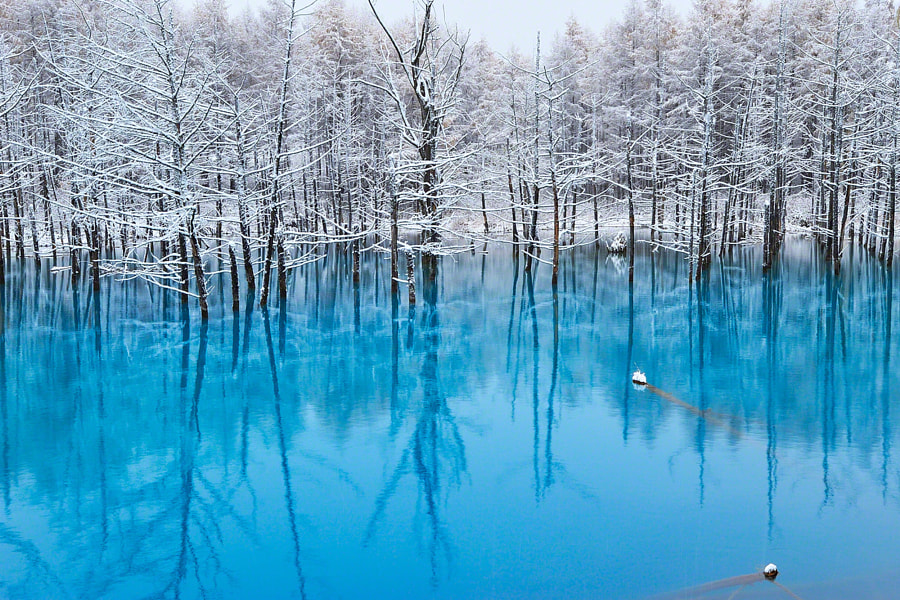 v2?webp=true&sig=a0d45c7cc601bc7e08f2ccc18f58befdb273ebd7e9aa068a70a38ef5429f617f L'étang bleu d'Hokkaido en toutes saisons par Kent Shiraishi