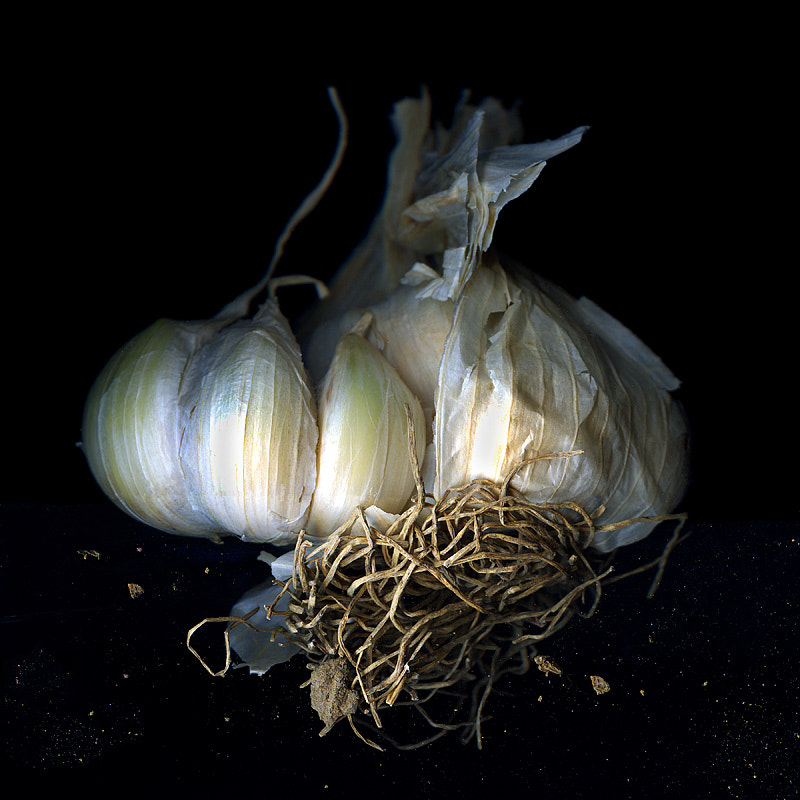 Photograph AIL, AIL, AIL... MORE FRENCH GARLIC! by Magda Indigo on 500px