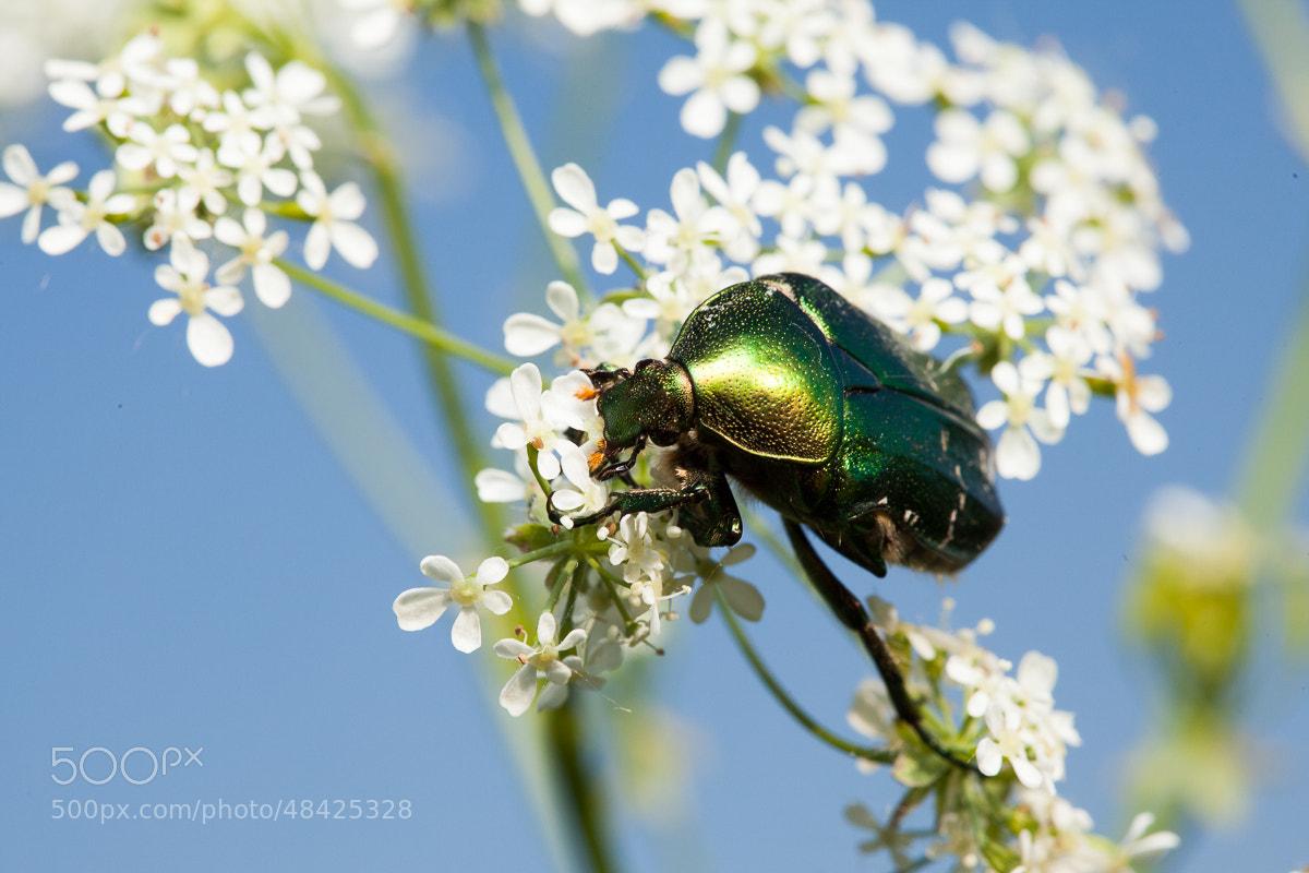 Photograph Piece of Summer by Denis Belyaev on 500px